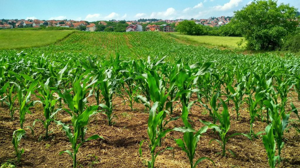 Agriculture: Nigeria's Largest Employer and The Role of Women
